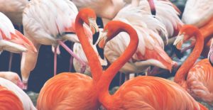 flamingo-3526365_640
