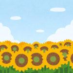 夏と言えば向日葵です
